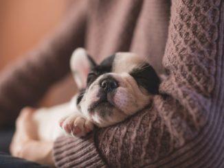 Hundehöhle oder Hundebett was ist besser?
