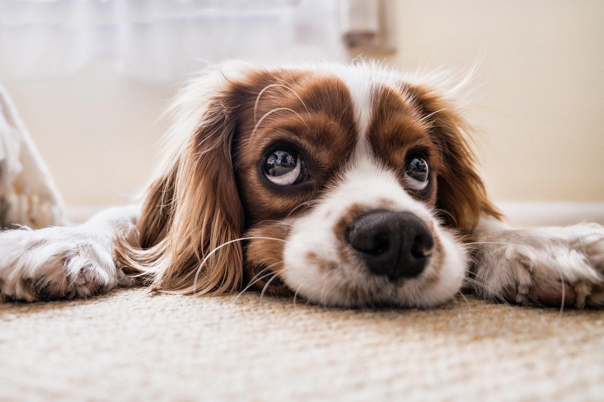 Reisebett Hund