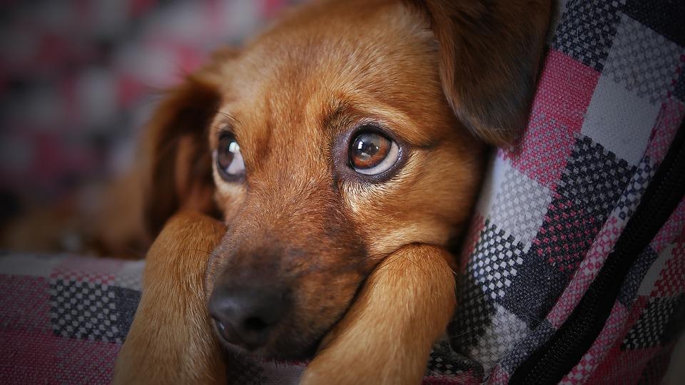 hund beruhigen