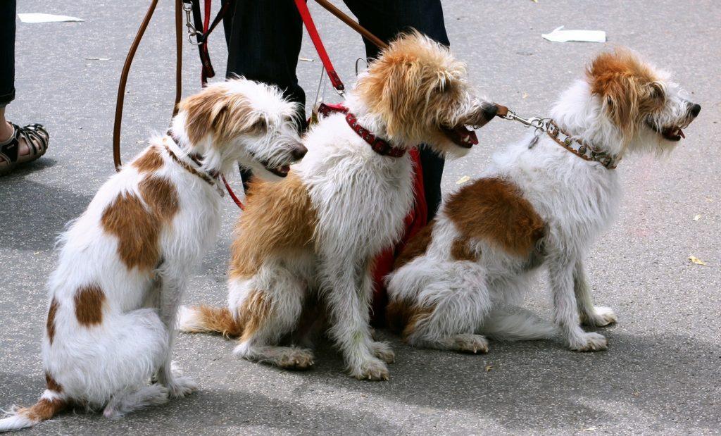 Die beliebtesten Hundeleinen im Überblick