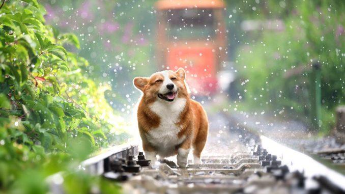 Ist mein Hund glücklich
