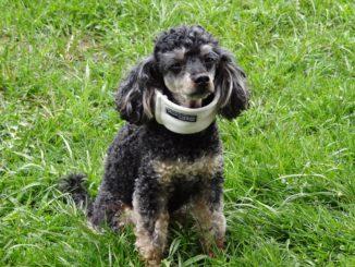 Der Veteri erste Hilfe Kurs für Hunde