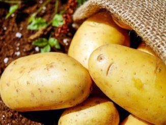 Dürfen Hunde Kartoffeln essen?