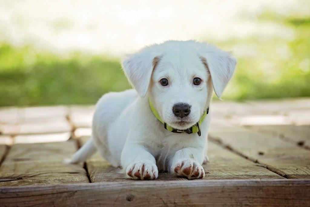 Hund ohne Leckerli erziehen