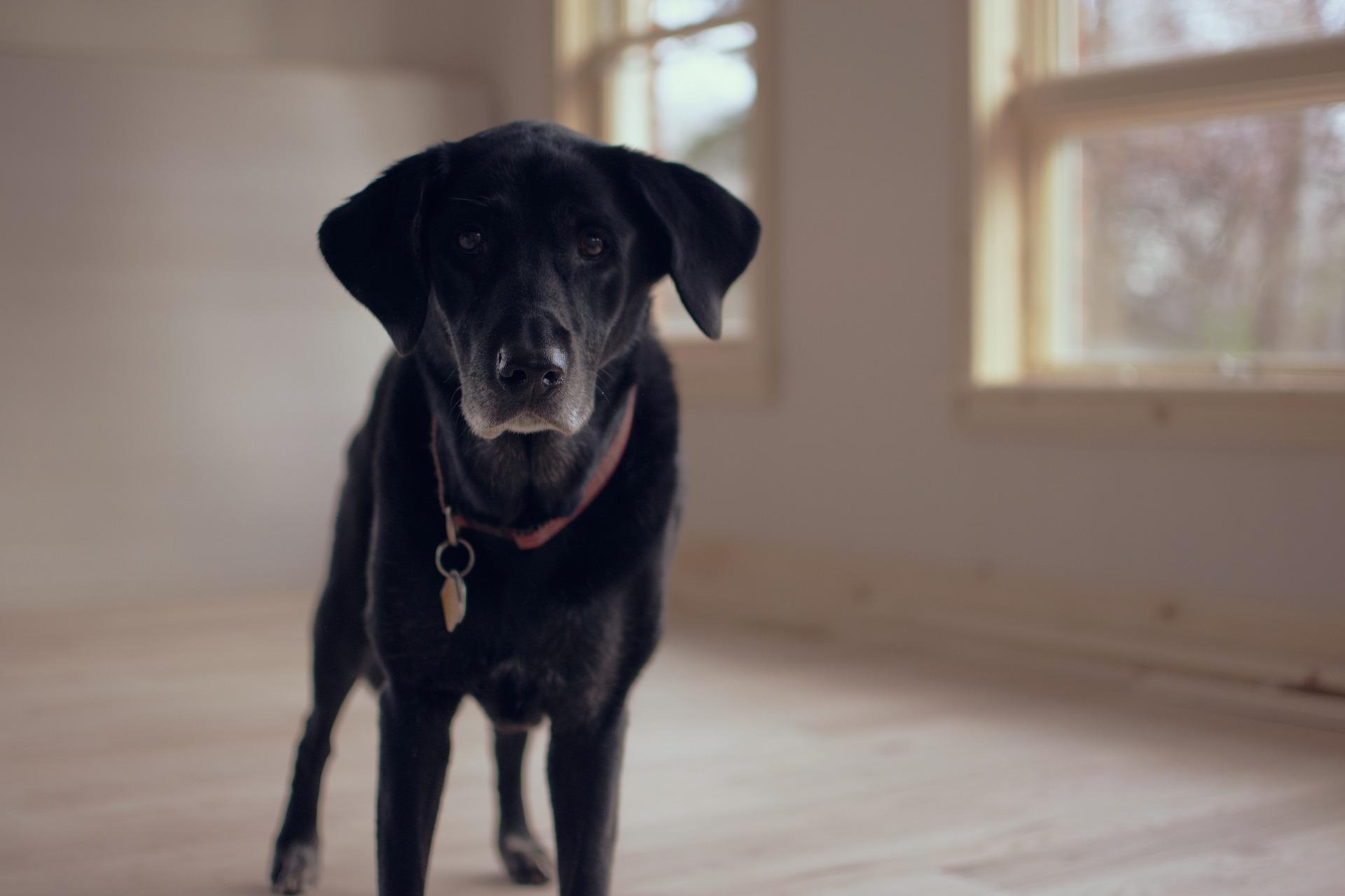 Joggingleinen Hund