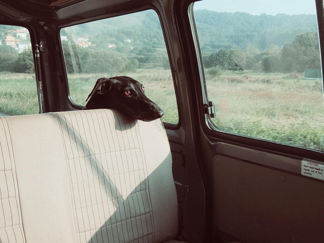 Autorampe Hund