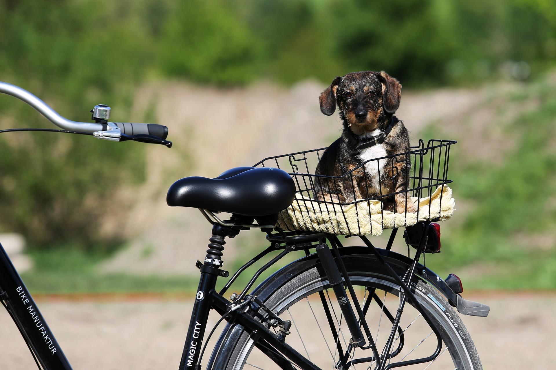 Fahrradkorb Hund