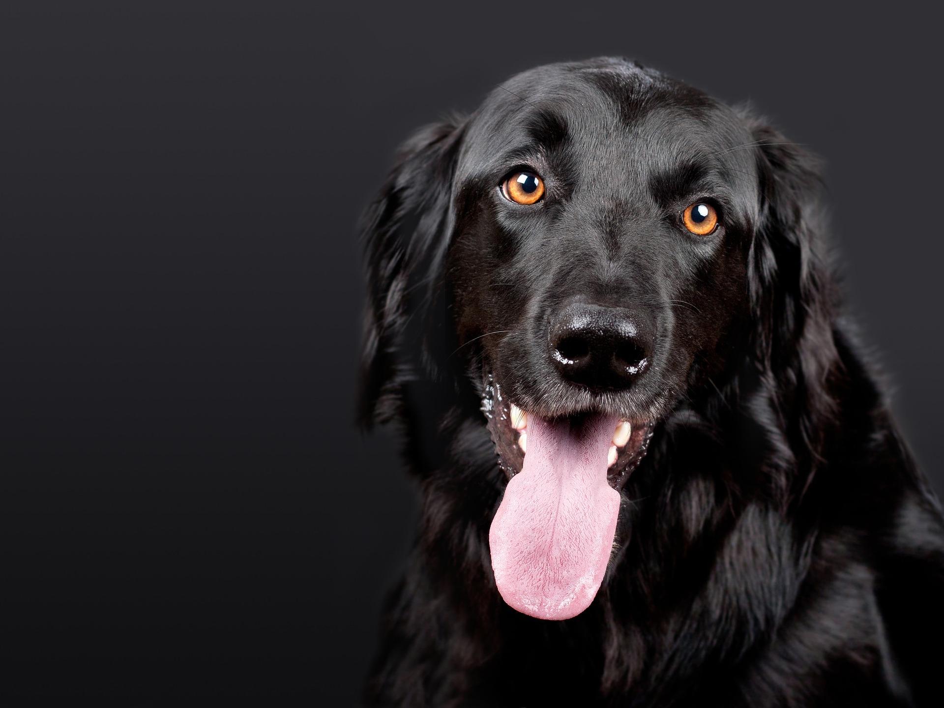 Flohshampoos Hund