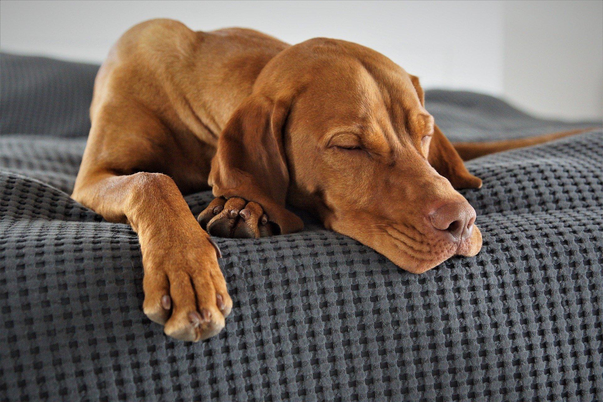 Fußmatte Hund