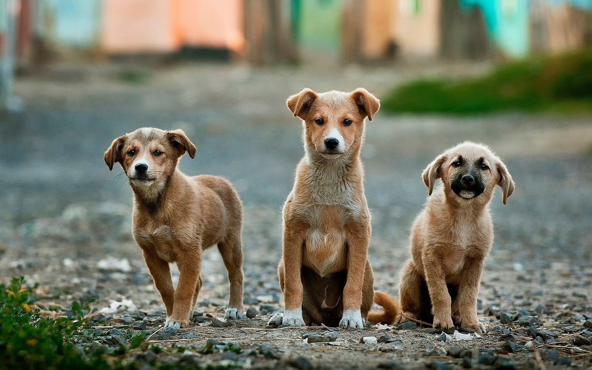 Laufstall Hund