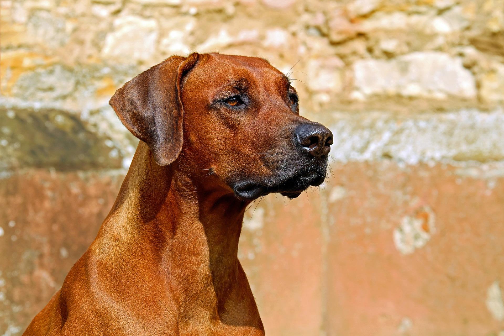 Mobiler Zaun Hund