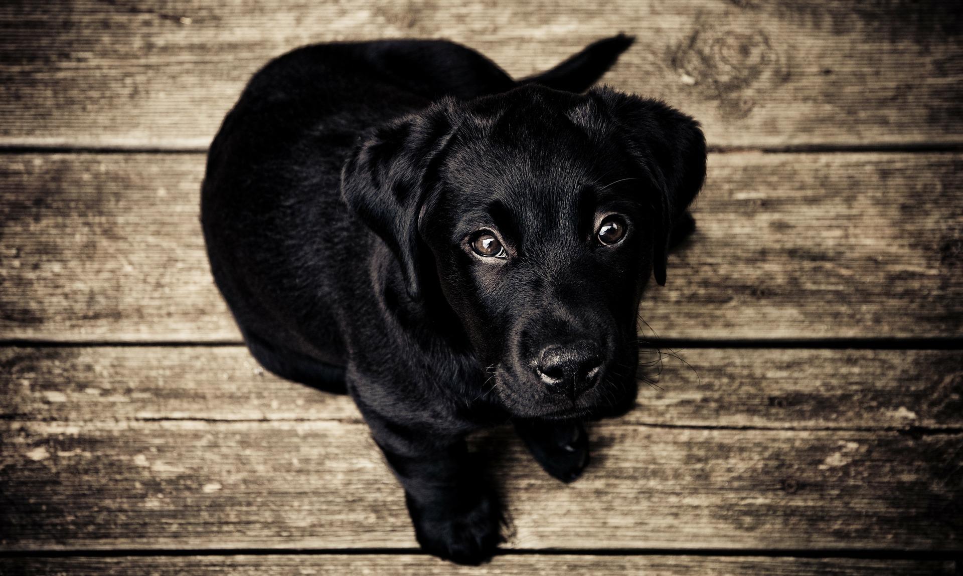 Türgitter Hund