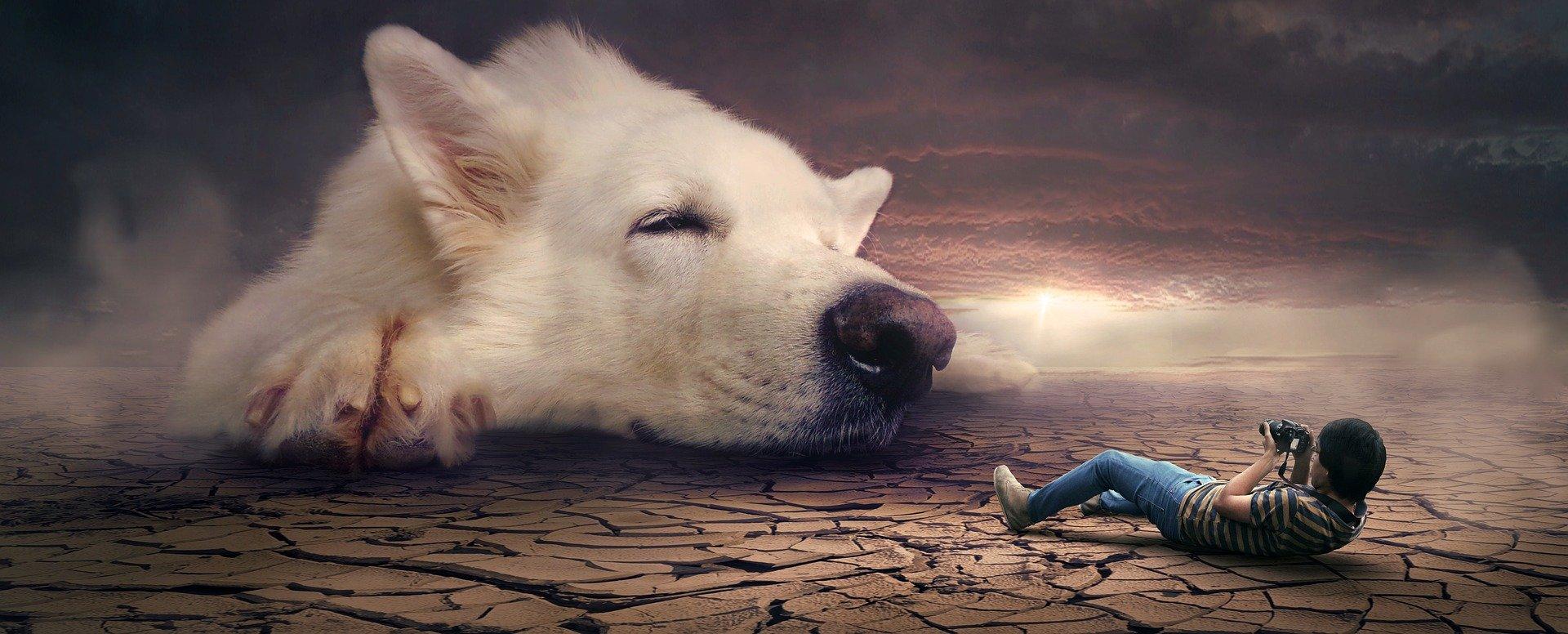 Wandtattoo Hund