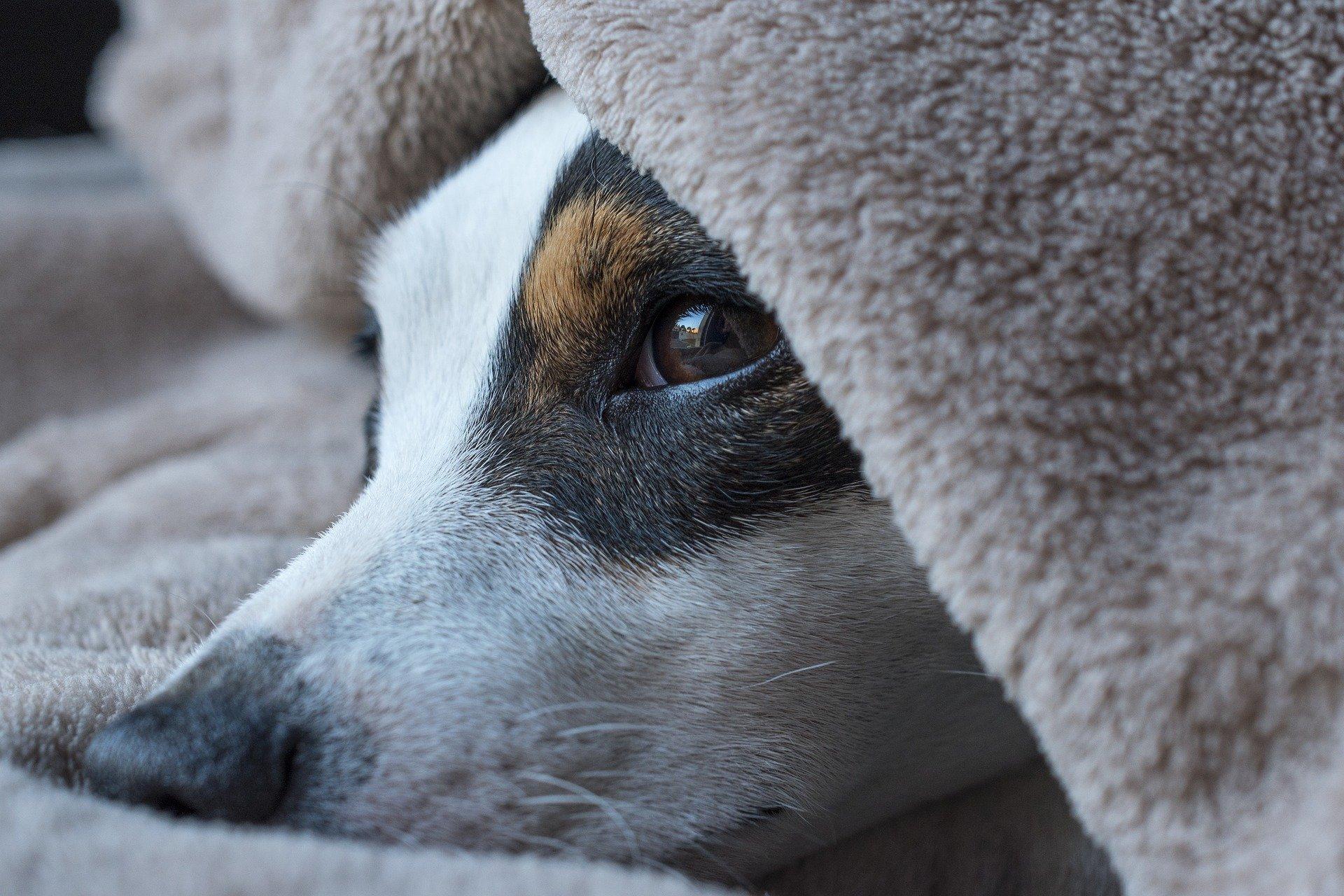 Wurfbox Hund
