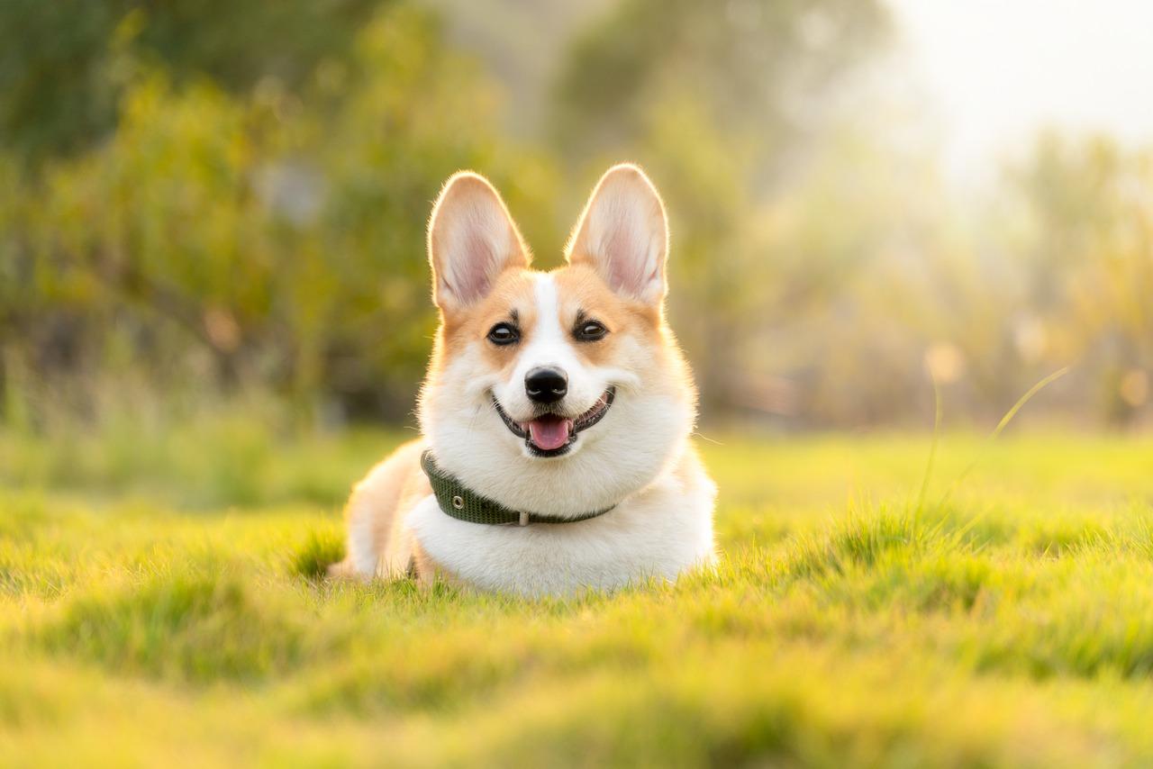 Zeckenzangen Hund