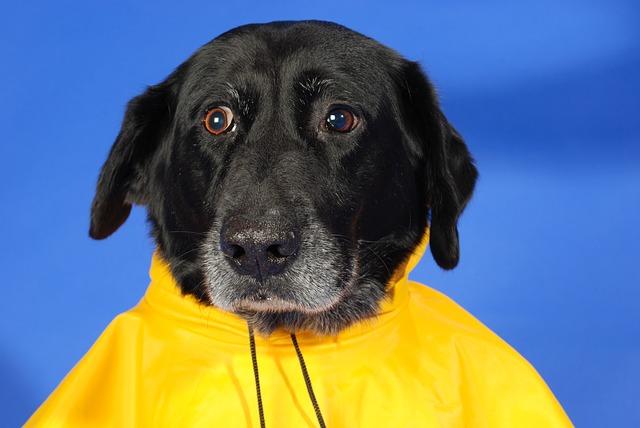 Regenmantel Hund
