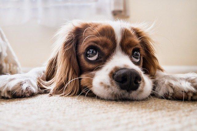 Badewanne Hund