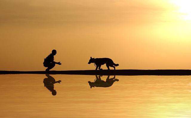 Schleppleine Hund
