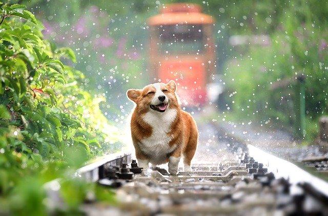 Schwimmleine Hund