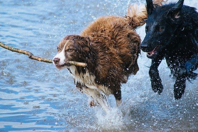 Hunde Sicherheitsgeschirr