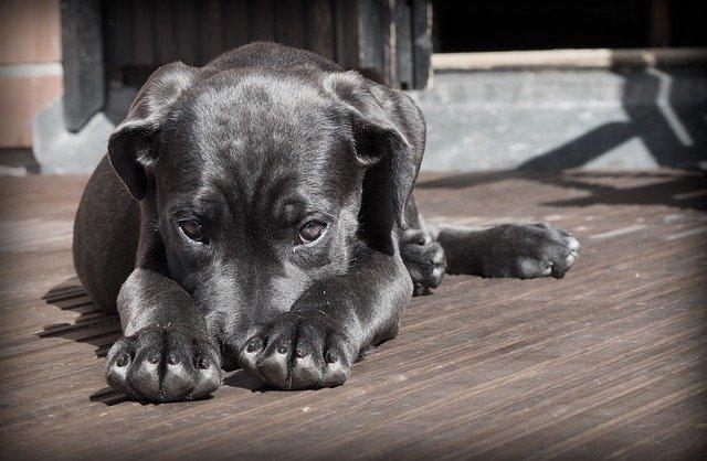Halstuch Hund