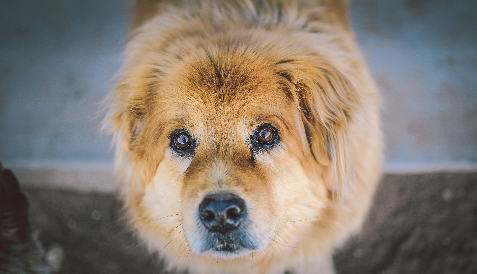 Hundebuggy bis 30 kg