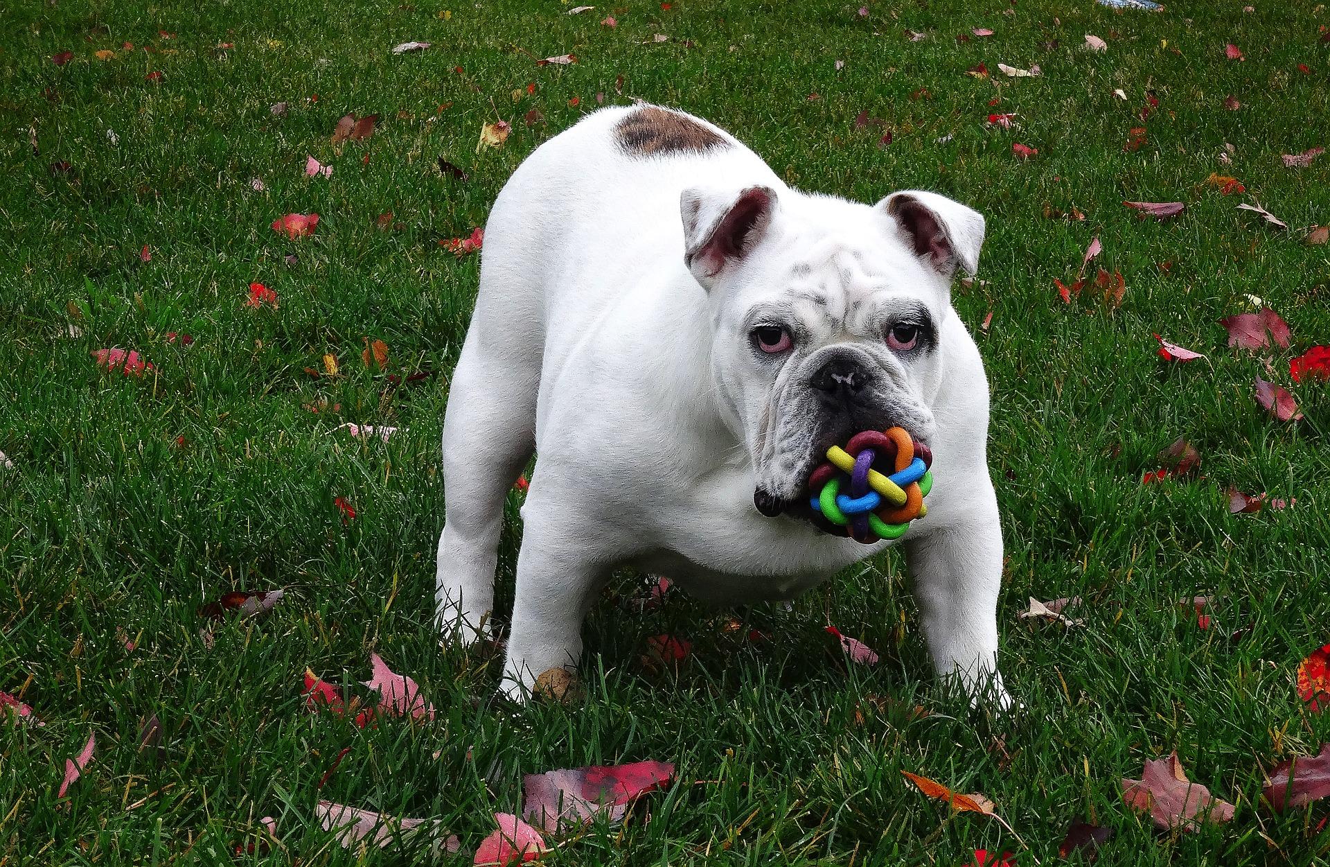 Hundebuggy bis 20 kg