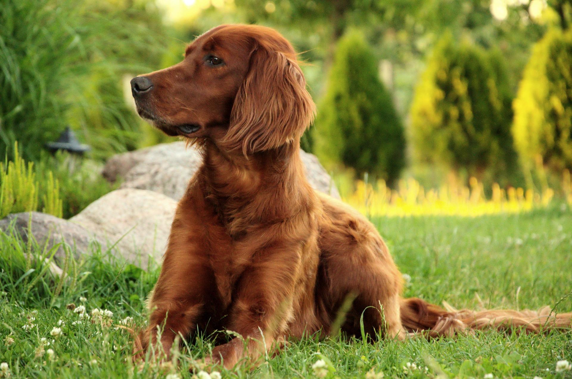 Hundetragetasche bis 10 kg