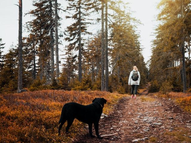 Was tun gegen Zecken bei HundenWas tun gegen Zecken bei Hunden